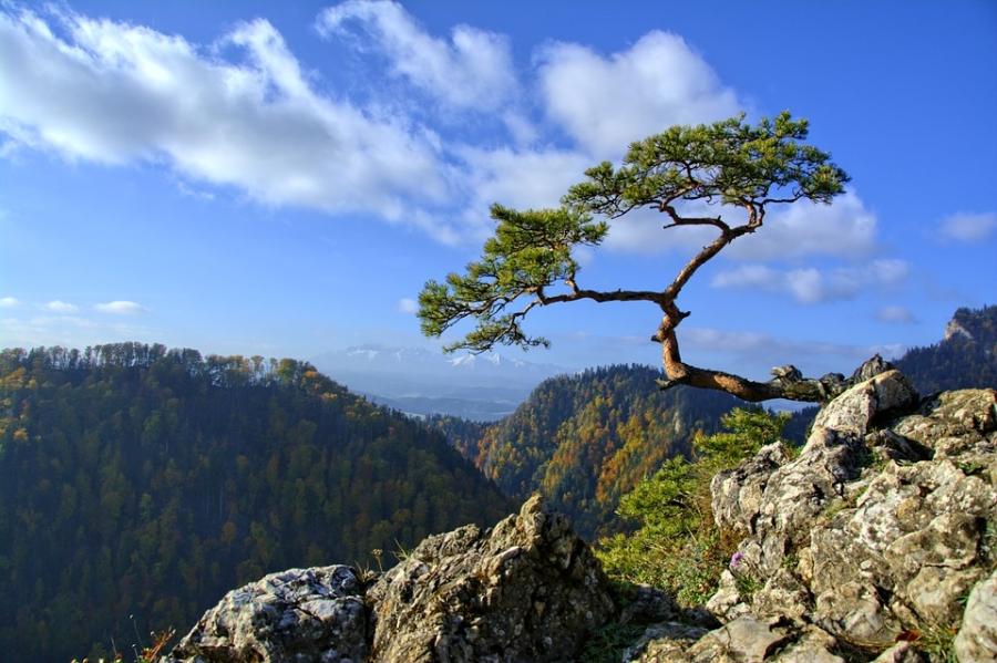 Szumią sosny na gór szczycie…